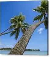 Palm Trees On A Tropical Beach, Fiji Canvas Print