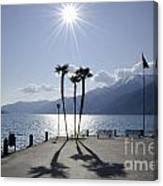 Palm Trees With Shadows On The Lakefront Canvas Print