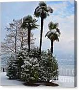 Palm Trees With Snow Canvas Print