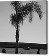 Palm Walk Canvas Print