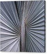 Palmetto Fan Canvas Print