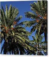 Palms 9838b Canvas Print