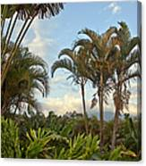 Palms In Costa Rica Canvas Print