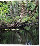 Palms On The River Canvas Print