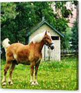 Palomino In Pasture Canvas Print
