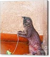 Pancho With His Toy 2 Canvas Print