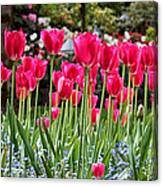 Panel Of Pink Tulips Canvas Print