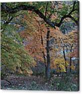 Panorama Of Fall Colors At Lost Maples Canvas Print