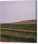 Panoramic View Of An Alfalfa Field Canvas Print
