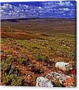 Panoramic View Of Fossil Butte Nm Valley Canvas Print