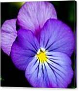 Pansy Face Canvas Print