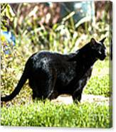 Panther In The Backyard Canvas Print