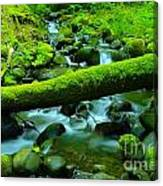 Paradise Of Mossy Logs And Slow Water   Canvas Print