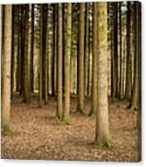 Parallel Lines Canvas Print