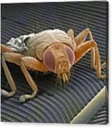 Parasitic Fly, Sem Canvas Print