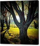 Paris Tree Canvas Print