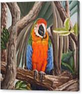 Parrot At New Orleans Zoo Canvas Print
