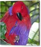 Parrot Attitude Canvas Print