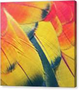 Parrot Feathers Canvas Print