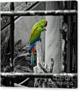 Parrott Thro The Cage Canvas Print