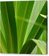 Particularly Green Canvas Print