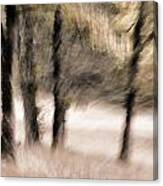 Passing By Trees Canvas Print