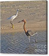 Passing Egrets Canvas Print