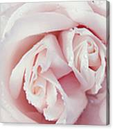Passion For Flowers. One Rose Two Hearts Canvas Print