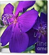 Passion Purple Canvas Print