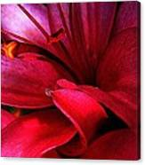 Passionate Lily Canvas Print