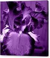 Passionate Purple Overload Canvas Print