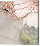 Passionly  Pink Canvas Print