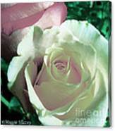 Pastel Pink And White Rose Canvas Print