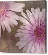 Pastel Pink Passion Canvas Print