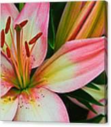 Pastel Pretty Canvas Print