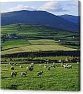 Pastoral Scene Near Anascual, Dingle Canvas Print