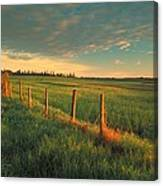 Pasture Sunrise Canvas Print