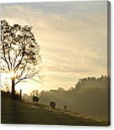Pasture Sunrise Canvas Print