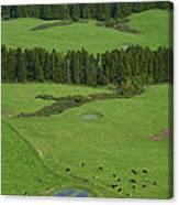 Pastures In Azores Islands Canvas Print