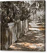 Path Along The Fence Canvas Print