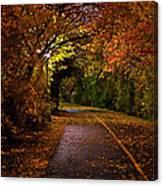 Path At Night Canvas Print