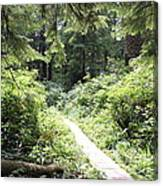 Path Of Light Canvas Print