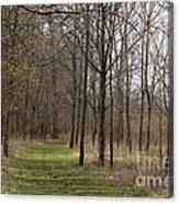 Path Of The Trees Canvas Print