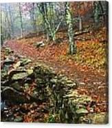 Path Through Forest, Shenandoah Canvas Print