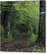 Path Through The Woods Inistioge Canvas Print