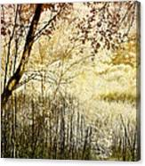 Path To The Meadow Canvas Print