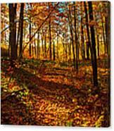 Paths Home Canvas Print