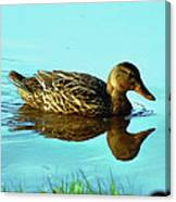Peaceful Duck - 0993c2502e Canvas Print
