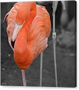 Peaceful Flamingo Canvas Print