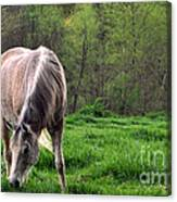 Peaceful Pasture Canvas Print